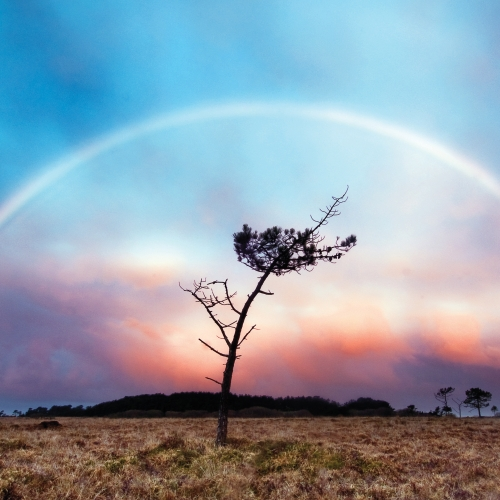 Single tree set in landscape with dramatic sky and framed by a rainbow.