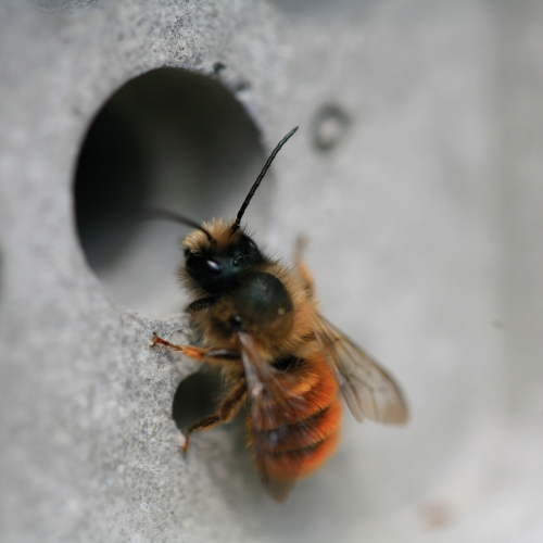 A bee climbing in a hole in the wall