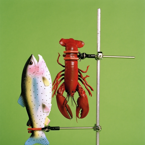 Plastic fish and lobster held in clamps on a green background.
