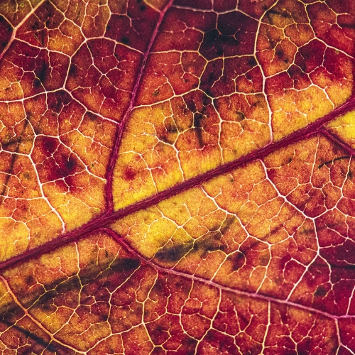 Close up of leaf and veiny surface.