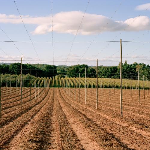 Kem Harvest Webready 10