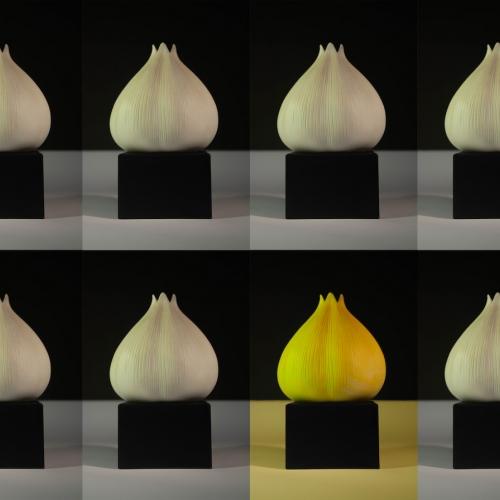 Bulbs of garlic sat in uniform