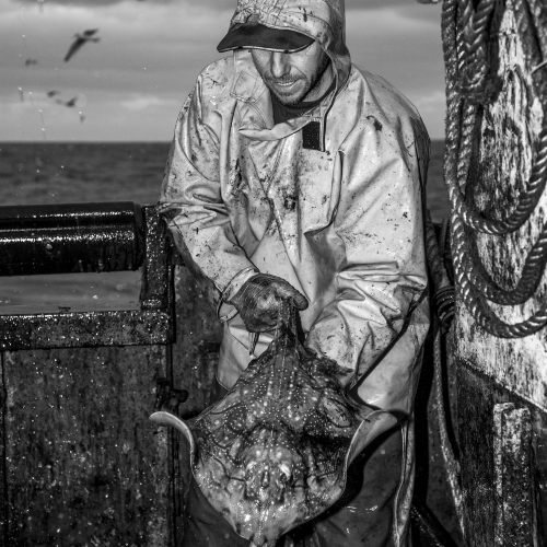 Man in all weather gear on boat holding ray, seagulls flying in background.