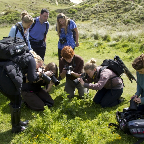 Students in a field photographing something close up on a plant.