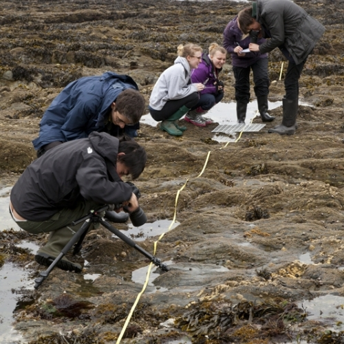 Students crouched over and photographing in rock pools.
